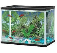 Aqarium für Fische Aquaristik Zubehör Aquariumzubehör